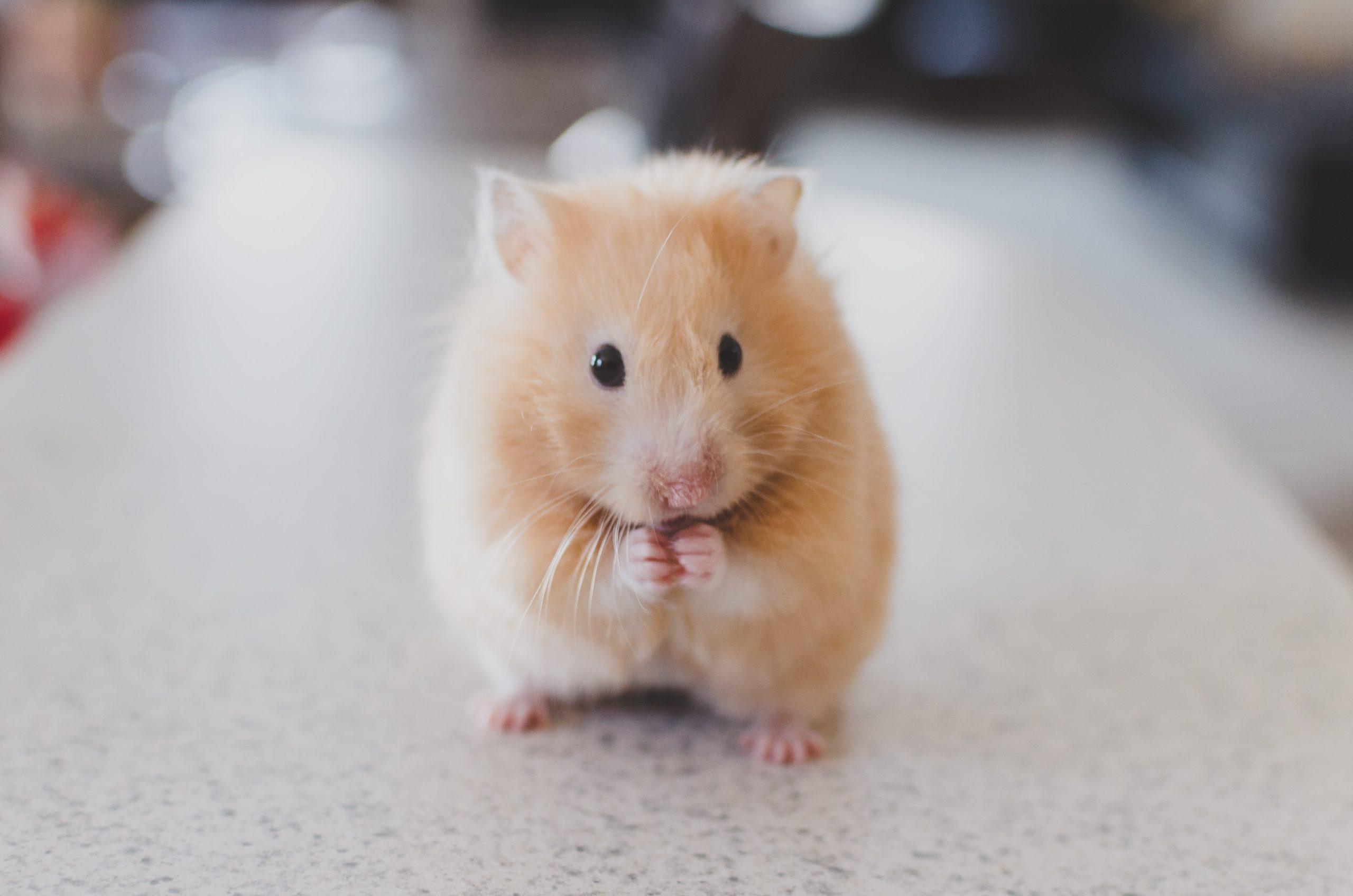 Mon aspirateur autonome a écrasé mon hamster ! Qui est responsable ?
